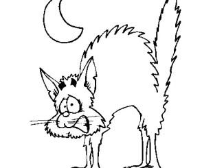 El gato bruja