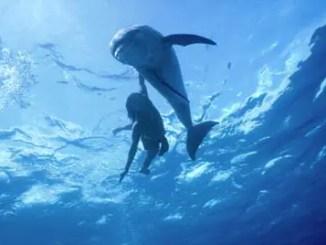 niña y delfin