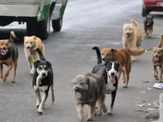 cuentos de perros para chicos