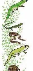 Los anfibios, una especie amenazada por el calentamiento global