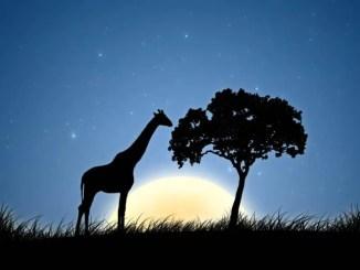 Cuentos infantiles de jirafas