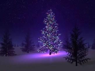 Cuentos de abetos de navidad