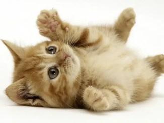 cuentos cortos de gatos