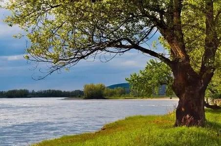 Poemas sobre la tierra y el medio ambiente