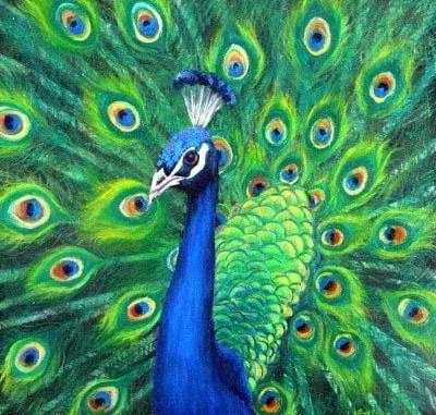 Cuentos sobre el pavo real