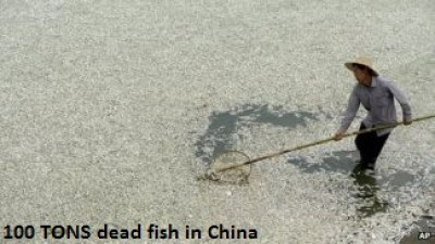 Fish die off in Wuhan