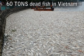 60tons morts vietnam de poisson