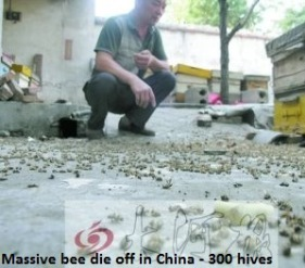 Bee die off china