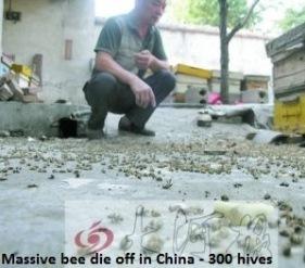 Bee die off China