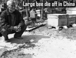 Bee die off in China