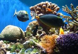 Coral Reef Die-off