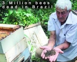 Dead bees in Brazil