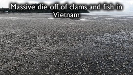 Dead clams in Vietnam