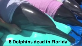 dauphins morts floride