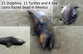 Dead dolphins in Mexico