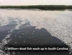 Dead Fish in Georgetown