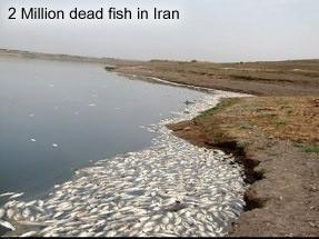 Dead fish in Iran