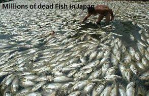 Dead Fish Japan