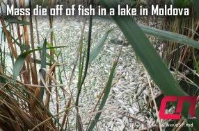 Dead Fish in Moldova