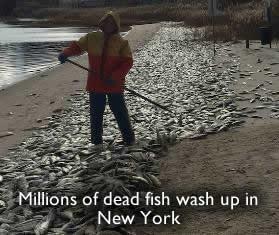 Les poissons morts à New York
