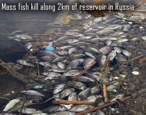 Dead fish in Russia