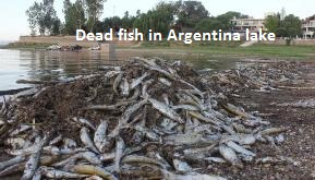 Dead Fish in San Roque