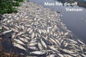 Mass Fish Die Off Vietnam