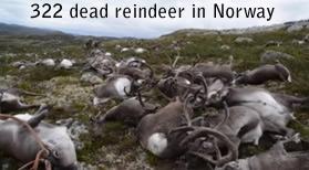 rennes morts en Norvège