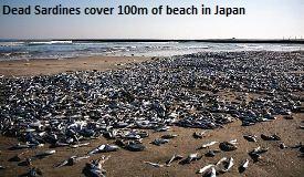 Dead Sardines Japan
