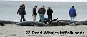 Dead Whales Falklands
