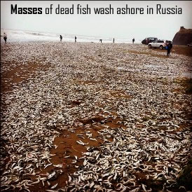 Fish dead in Russia