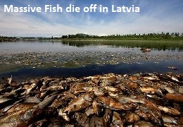 Fish die off in Latvia