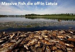 Fish die off in Latvia