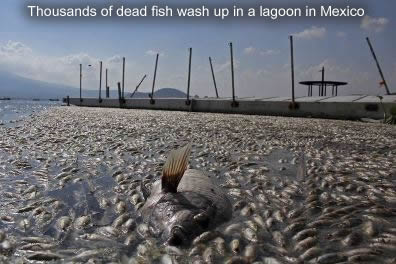 Fish Die off in Mexico