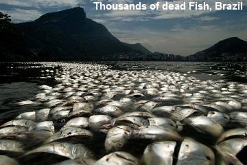 Dead Fish in Brazil