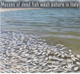 Fish kill in Italy