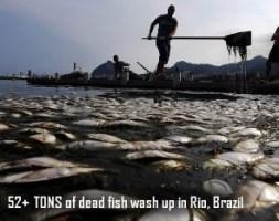 Fish kill in Rio