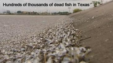 Fish Kill in Texas