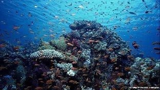 Health of Oceans