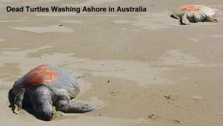 Mass Turtle Deaths