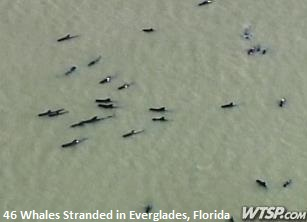Stranded Whales Everglades