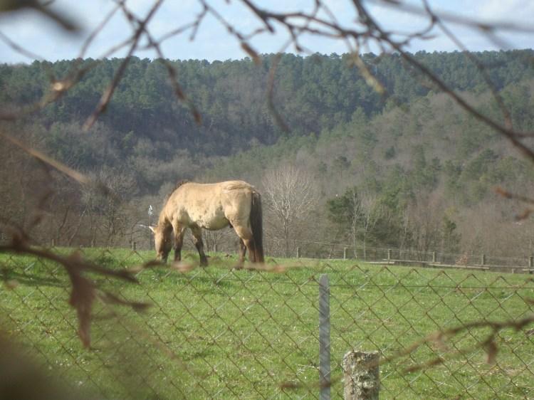 Horse we saw near Lascaux.