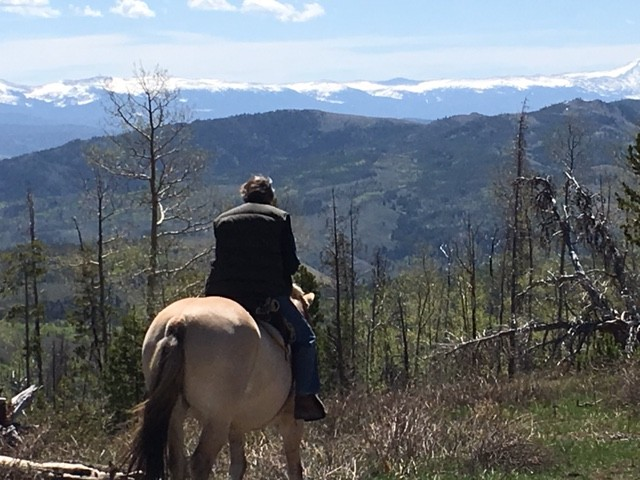 Rosie on Montana Spirit over looking Rocky Mountain Park.