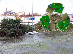 Recycle Xmas Trees