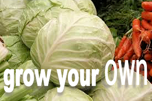 grow your own veg graphic