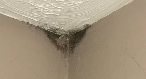 Mold in corner of ceiling 1