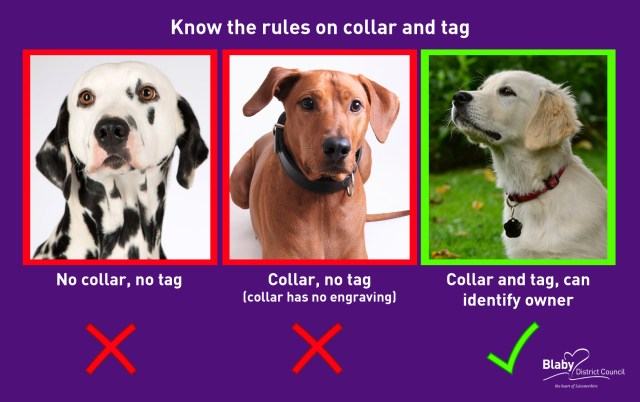 Collar & Tag news release image