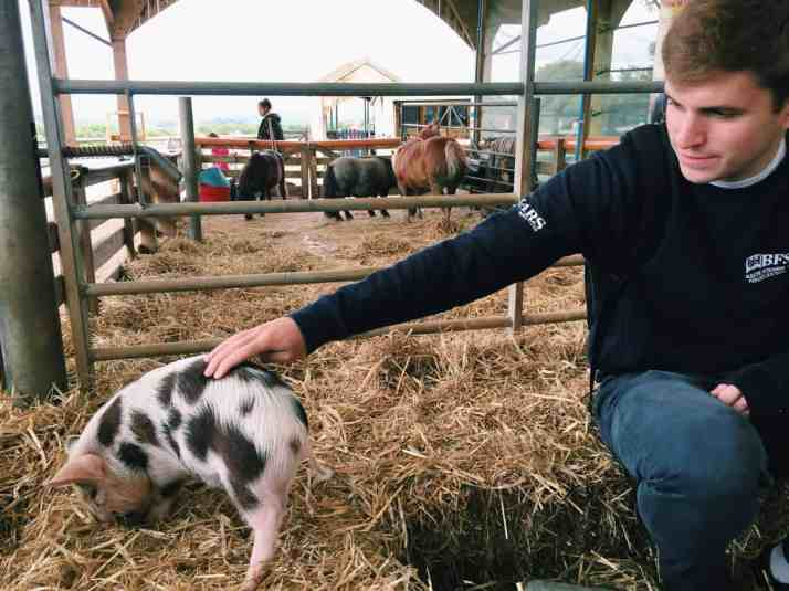 Check cuddling mini pigs in England off your bucket list at Pennywell Farm! I give you all the details including how to get to Pennywell Farm and more!