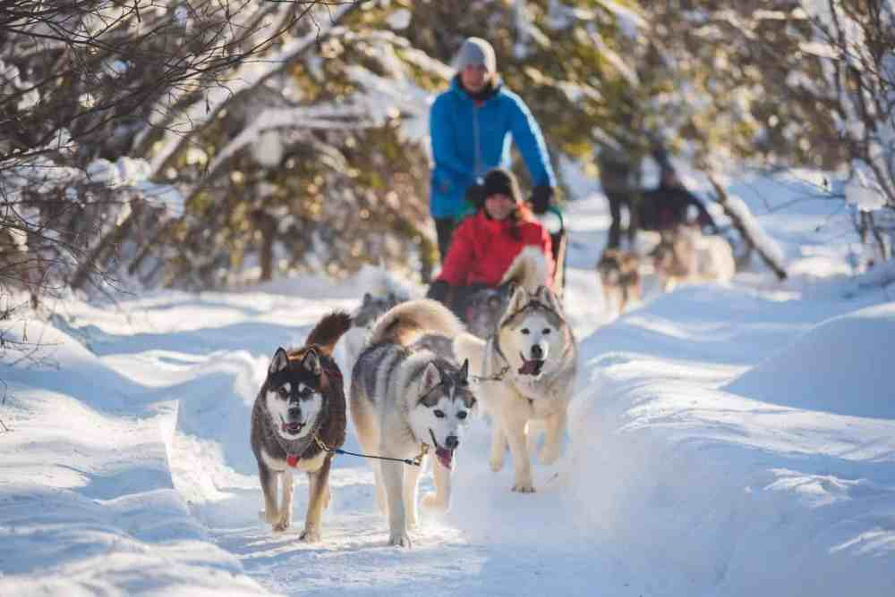 Dog sledding in Quebec City is a bucket list experience during a winter visit.