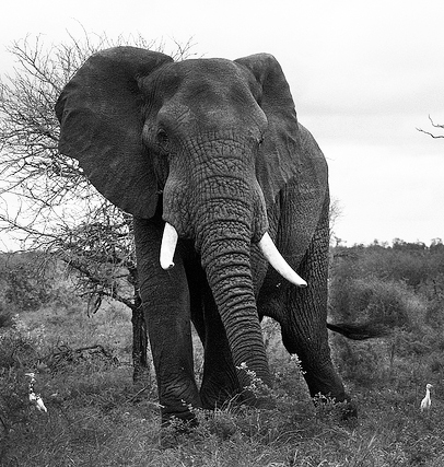 What I Learned About Fitness From an Elephant